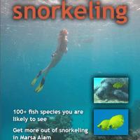 e-bog om fiskene i Rødehavet