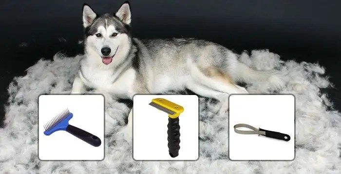 How To Groom Your Husky Snowdog Guru