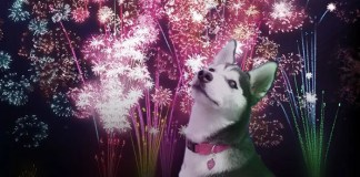 Husky and Fireworks