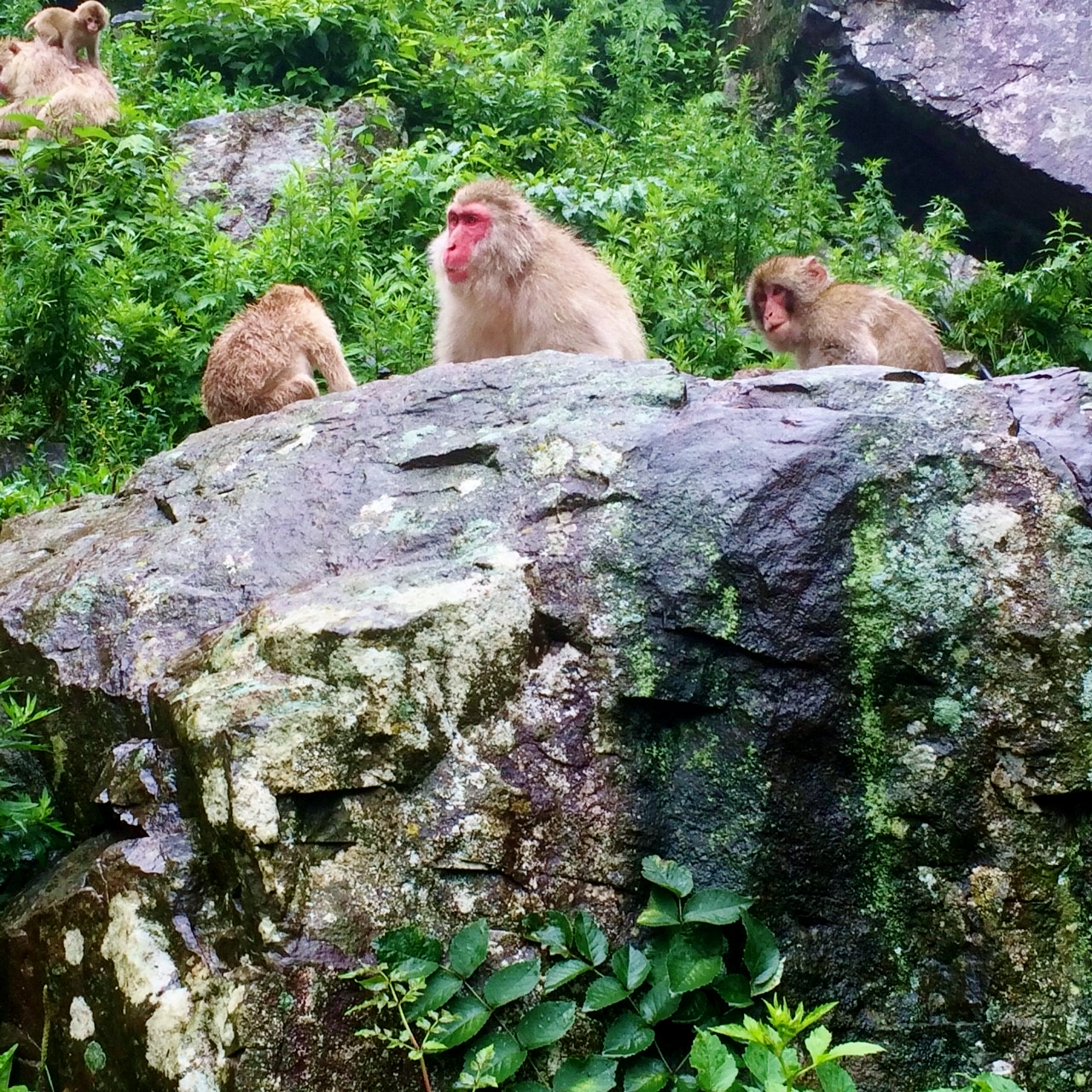 Reasons For The Visiting The Snow Monkey Park In Summer