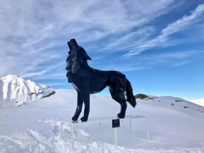 Een wolf op de piste van Courchevel