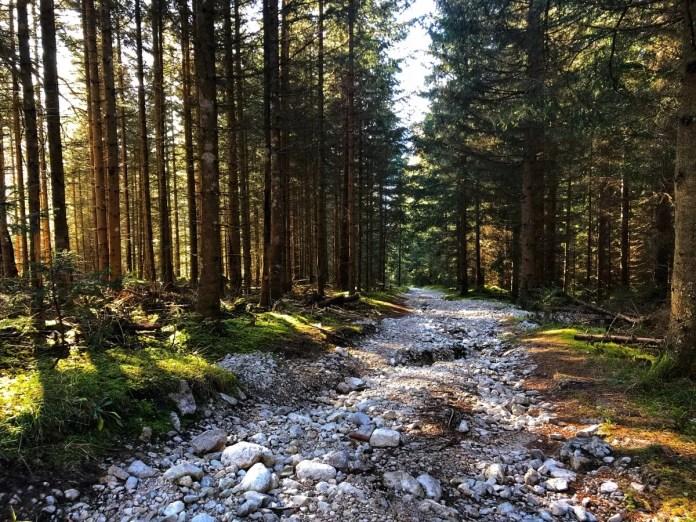 Bos in Ehrwald