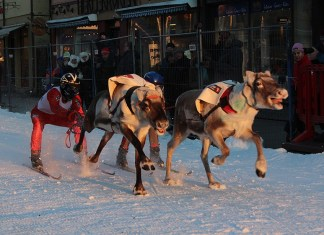 Skijoring rendierenrace Tromso. Foto: arctic_council via Flickr, labeled for reuse
