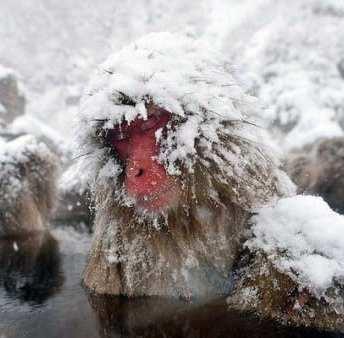 port-snow-monkeys-japan-20-11-600x4001d49