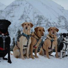 Photo credit: Telluride Ski Patrol