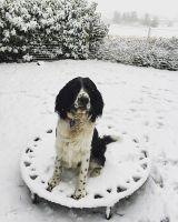 @surfinglangara Freddy the dog's first snow fall