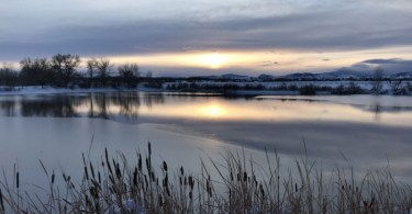 partially frozen lake with sunset reflection and reeds in foreground