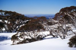snowy landscape with trees and blue sky in Australia
