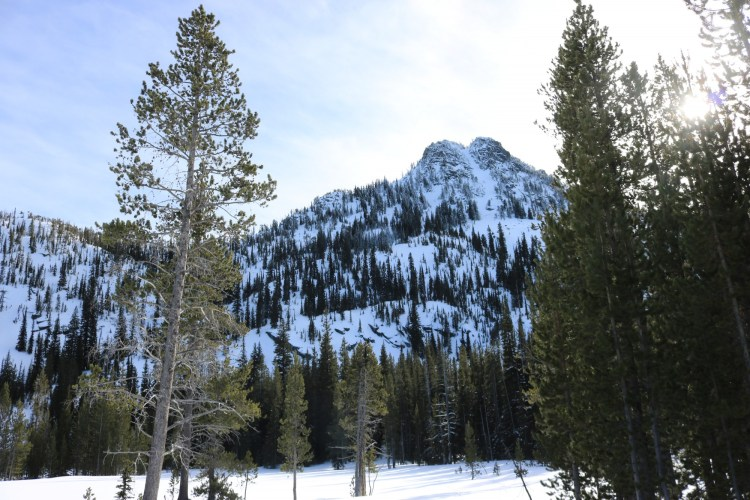 view of Gunsight Mountain in winter with sun shining through trees