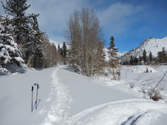 snowshoe tracks with poles