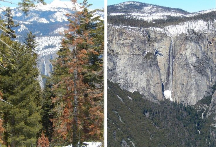 combo photo: view of Yosemite Falls close up and in the distance
