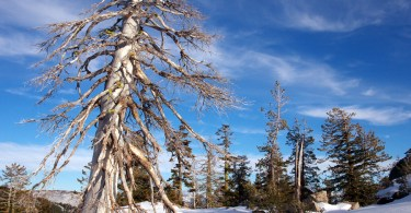 snowshoe lake tahoe