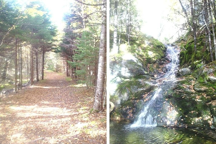 side by side L: start of trail with trees and sun R: small waterfall on trail