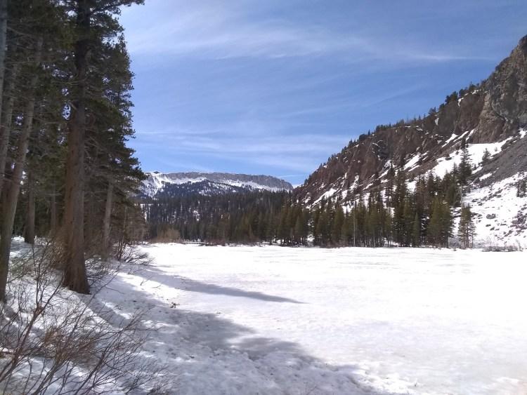 meadow near Mammoth Mountain