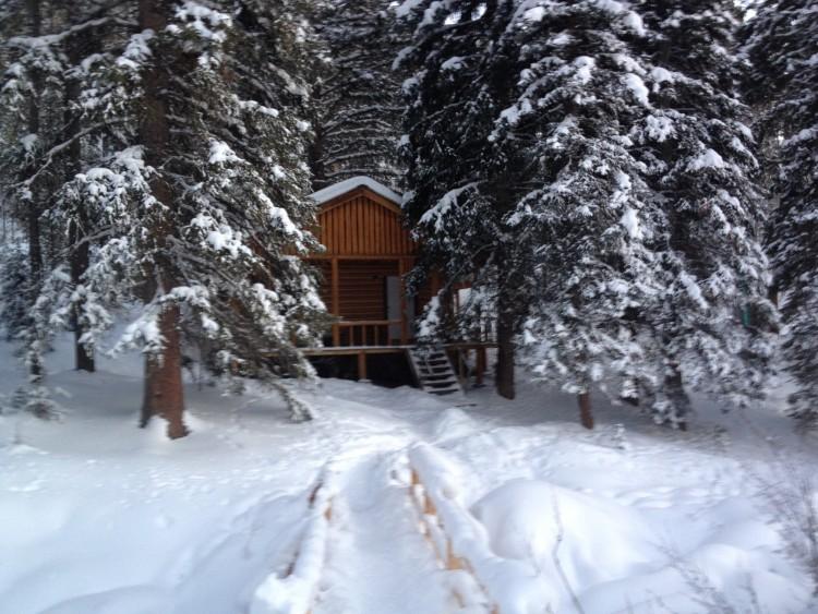 cabin in winter hiding between trees in the woods