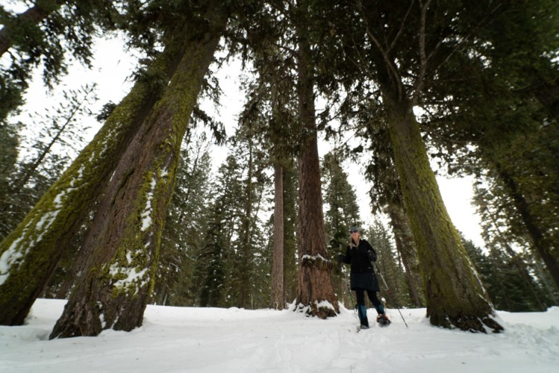 snowshoeing among the trees