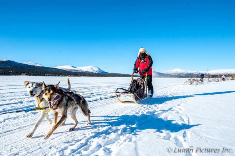 close up of person and dogs while dog sledding in Yukon