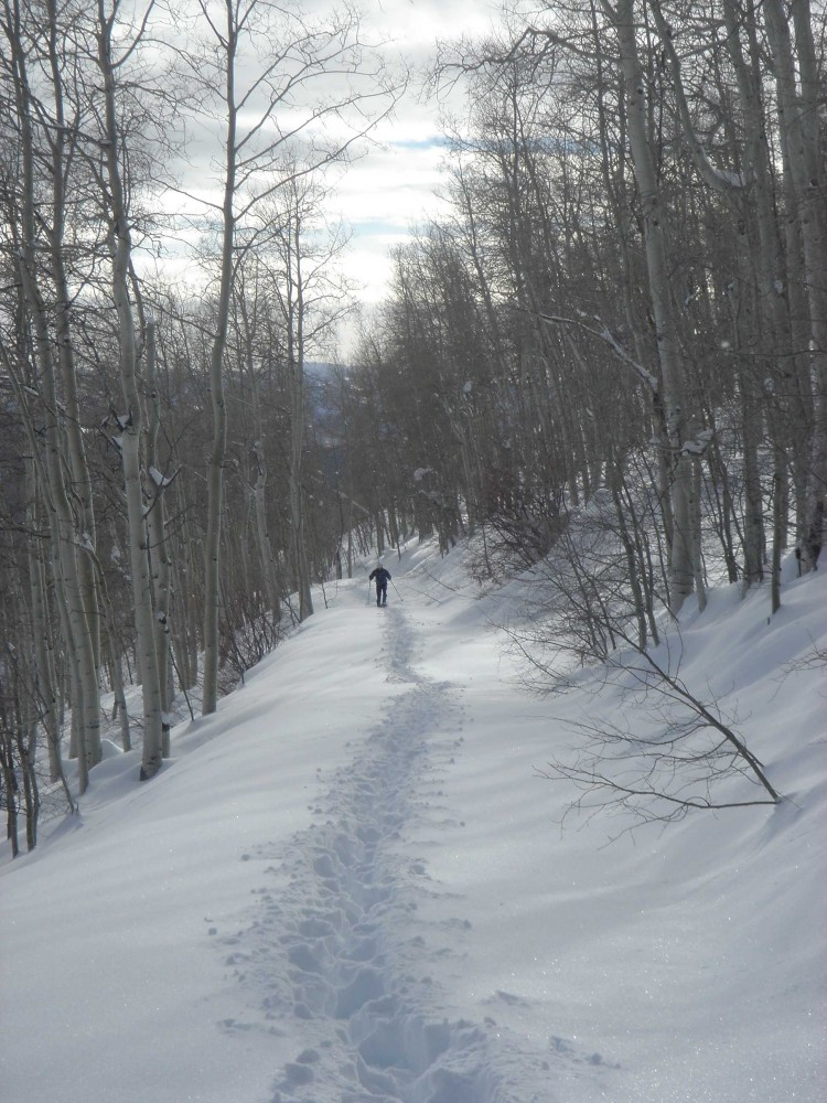 man snowshoeing between trees in Uinta Mountains Utah