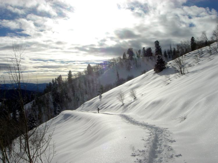 snowshoe trail with sun shining overhead in Uinta Mountains