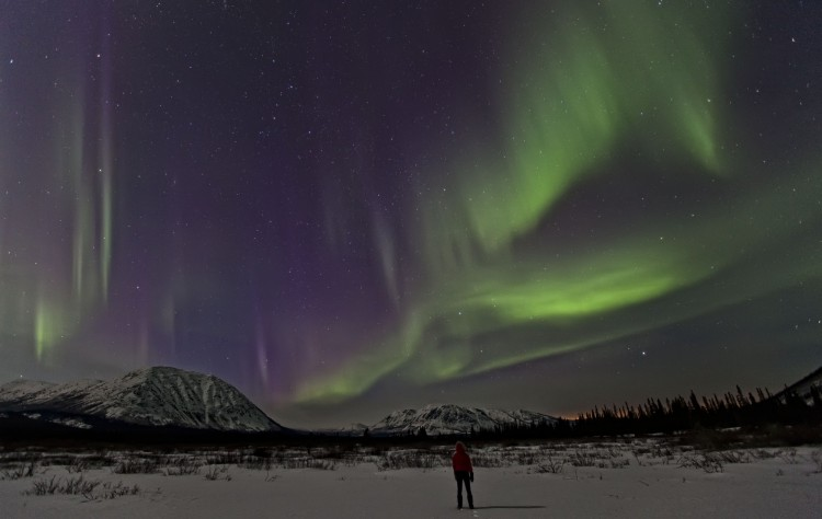 person standing under Northern Lights in the snow in Yukon