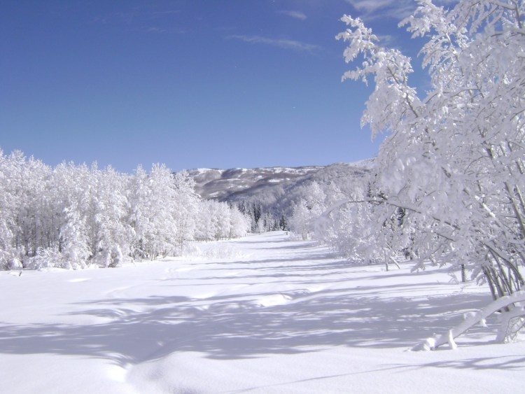 snow covered road and trees with mountains in background