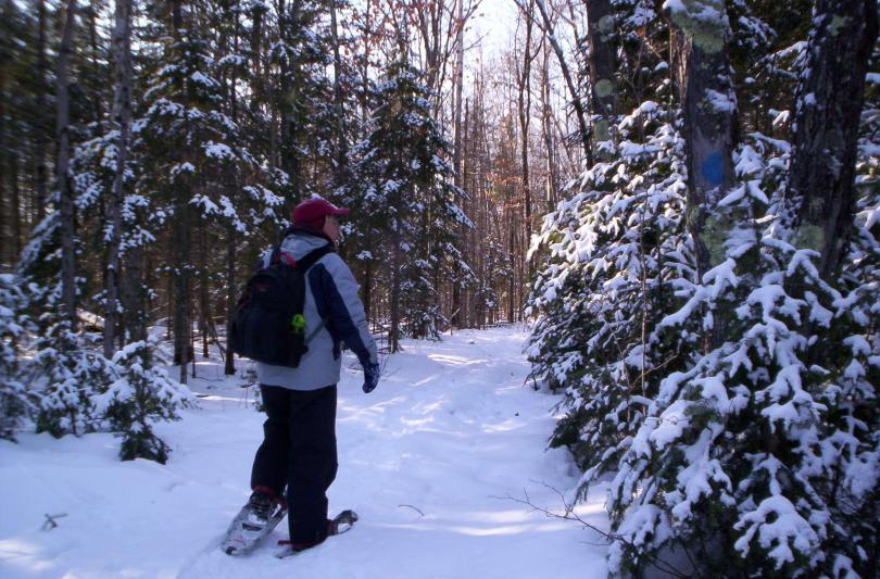 man snowshoeing alone in forest
