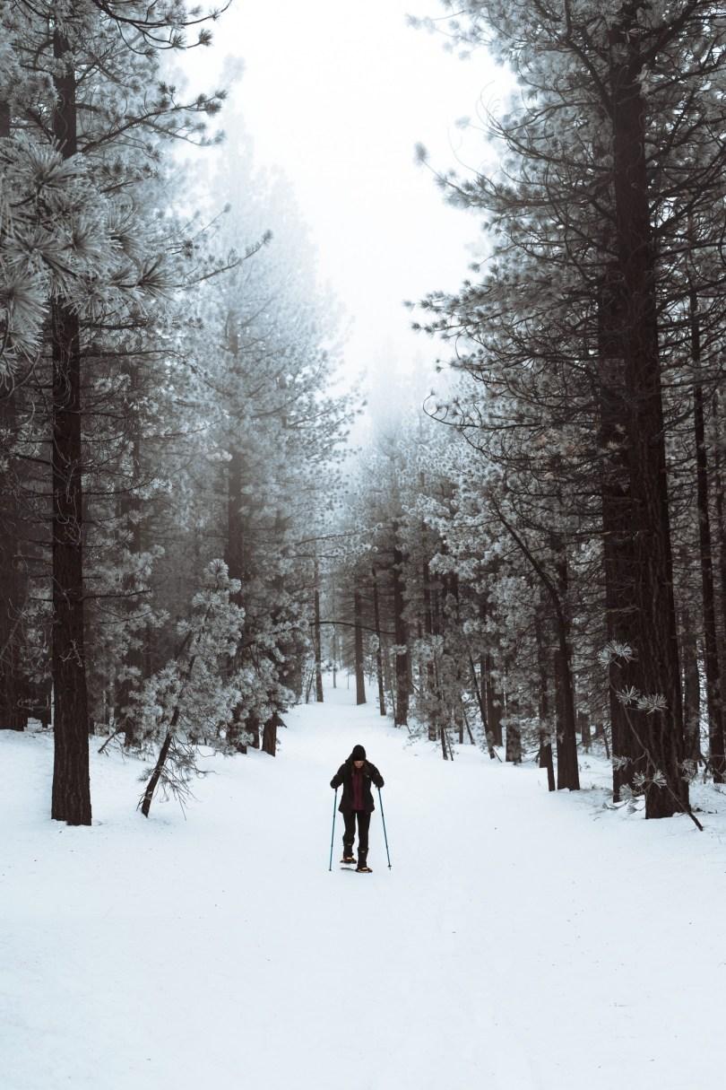 snowshoeing trail between tall trees, backyard