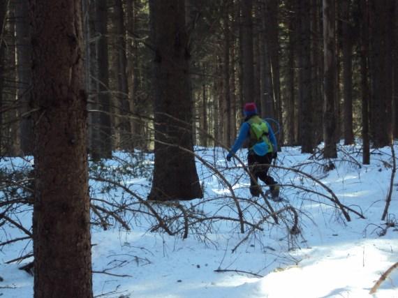 snowgaine race trees