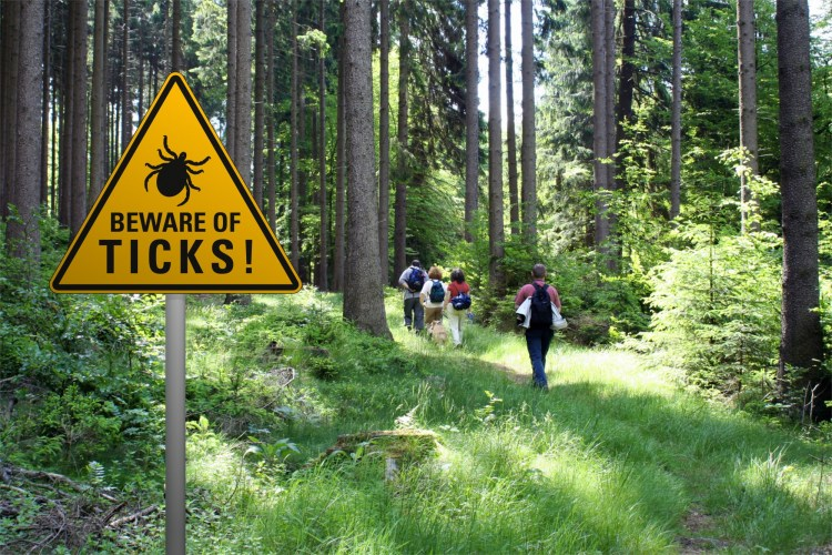 Lyme disease humans: sign warning of ticks in grassy area with hikers in background