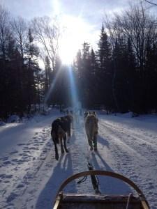 Dog Sled Adventure Le Baluchon