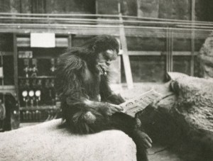 Some days you may feel like one of the chimps in Stanley Kubrick's movie 2001 A Space Odyssey.
