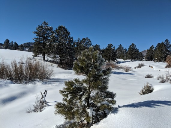 Elk Interpretative Trail, Chama New Mexico
