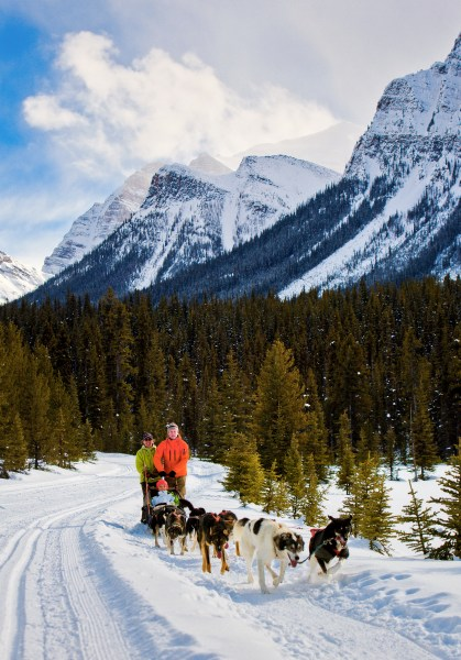 Dog sledding at Lake Louise