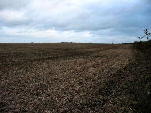 South Hams' field view