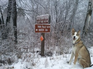 Cooper looks for laggards on the Tuscobia Winter Ultra Trails