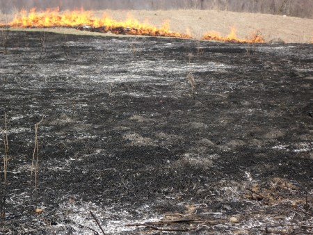 snowshoe ticks controlled burn meadow