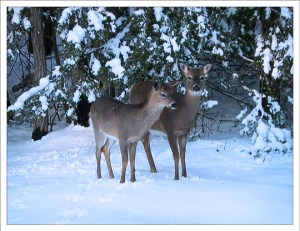 """Even the deer are asking: """"What are you waiting for? Register now!"""""""