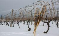 Thirty Bench- Wine Snowshoeing Tour- Ontario