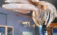 whale museum, San Juan Island