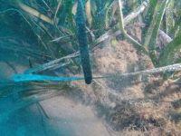 Progetto Life Seposso, monitoraggio della Posidonia oceanica a Piombino