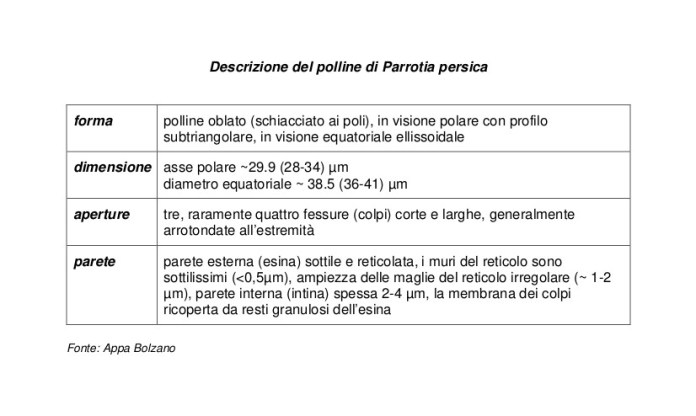 tabella con riportata la descrizione del polline di Parrotia persica (forma, dimensione, aperture e parete)