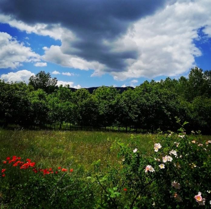Primavera Lucana