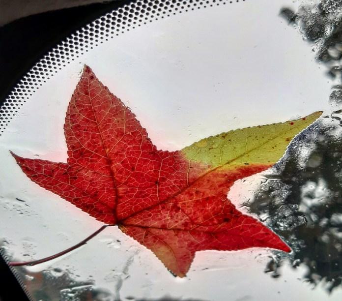 Voglia di autunno