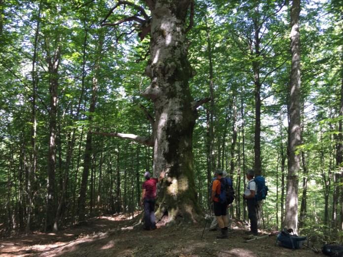 Molise _Parco Nazionale Matese_Biodiversità_Tre frati_Guardiaregia_CB