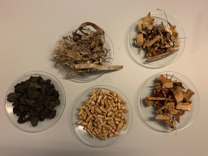 biomasse per produzione di energia