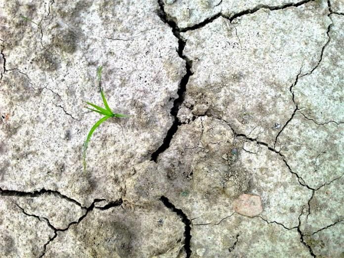 SUOLO: A seconda di dove vi trovate, possono volerci dai 100 ai 1000 anni per formare un solo centimetro di suolo.