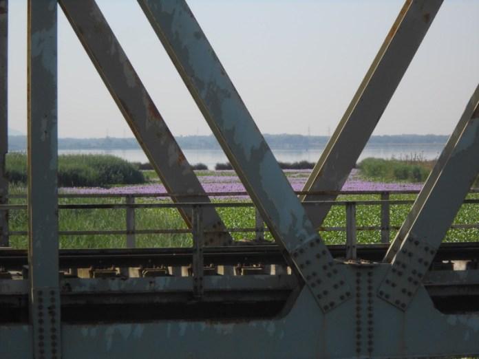 Il ponte e il Giacinto d'acqua