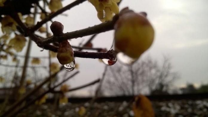 riflessi d'inverno