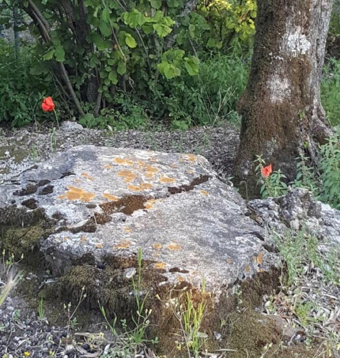 fiori di campo-Sieti di Giffoni Sei Casali (Sa)