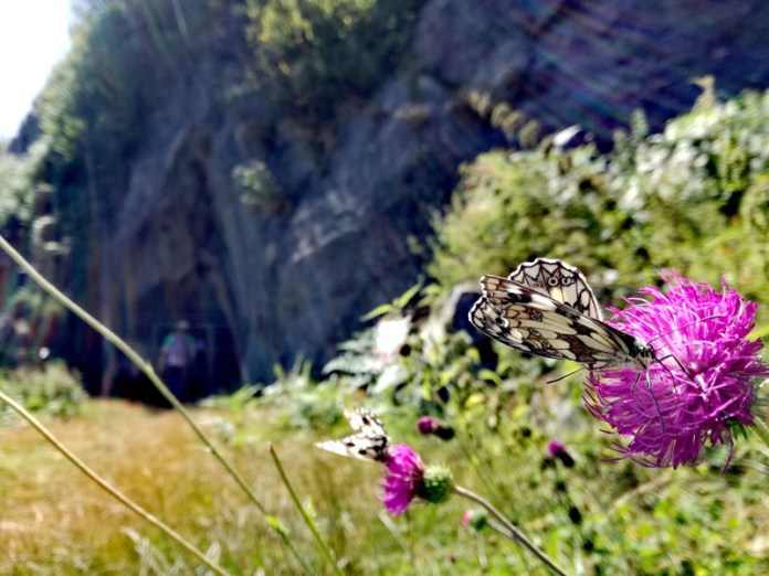 Banchettando con le farfalle - Monte Morissolo - Linea Cadorna - Verbania